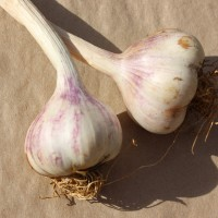 Picture of Garlic - 2 bulbs (homegrown)