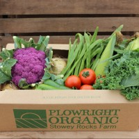 Picture of Large veg box (fewer roots)