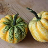 Picture of Squash - Celebration (homegrown)