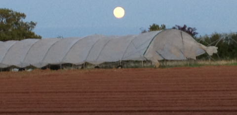 polytunnel lost in storm at Plowright Organic