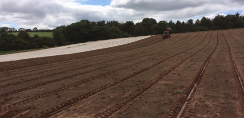 Planting cauliflower in Far Bank at Stowey Rocks on the Quantocks, Somerset